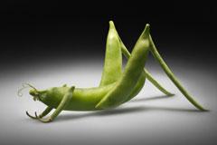 你知道你在吃什么吗?-你知道你在吃什么吗?转基因植物的DNA可能含有对付昆虫、动物的病毒,这些产品可能对你的健康造成危害。