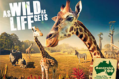 澳大利亚动物园宣传广告欣赏