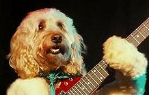 英国百货Sainsbury旗下服装品牌请来一群狗唱歌