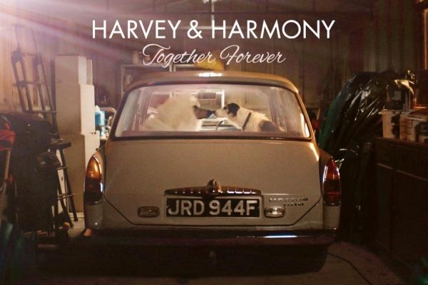 萌宠告别单身狗搞笑短片《Harvey与Harmony》