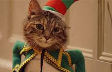 宠物食品品牌Temptations圣诞节广告 喵星人的遭遇