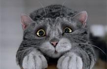 【字幕】英国Sainsbury连锁超市圣诞节广告 猫咪MOG