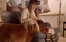 亚马逊新广告 孤单的矮种马