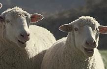 【字幕】本田汽车超级碗广告 会唱歌的羊